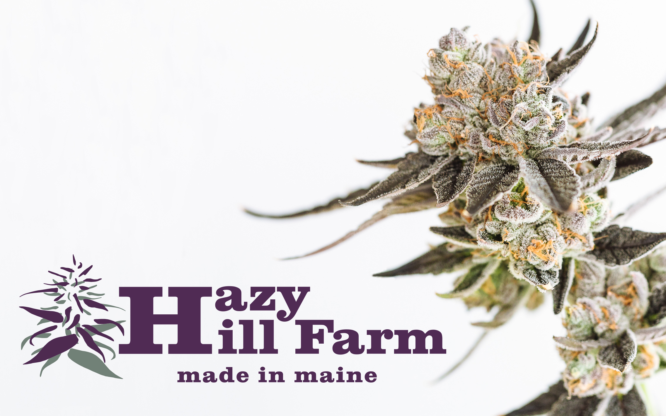 Hazy Hill Farm Cannabis Co
