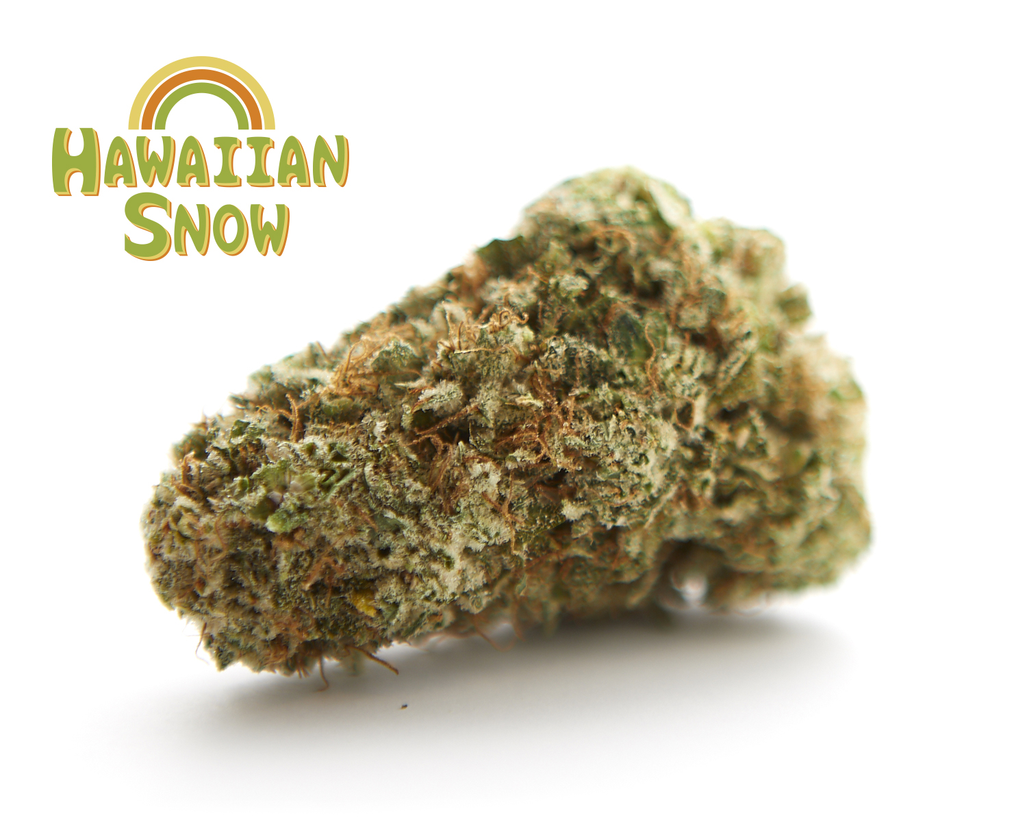 HAZY HILL FARM – HAWAIIAN SNOW